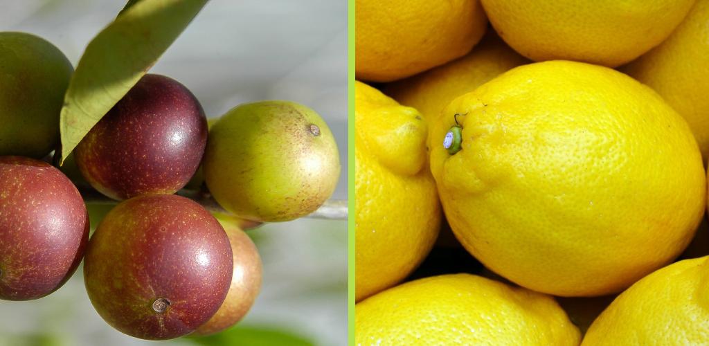 Vitamin C gegen Entzündungen